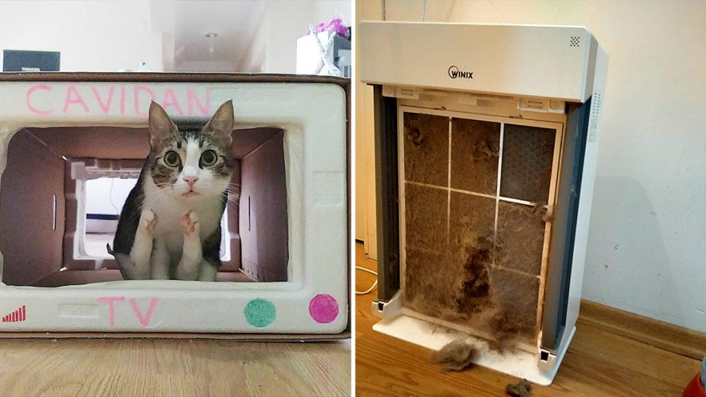 Kedi alerjisi ve köpek alerjisine iyi gelen WINIX hava temizleme cihazları