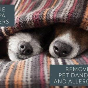 Evcil Hayvan Alerjisi Olanlar Için Winix Hava Temizleme Cihazları Ideal çözümler Sunuyor.