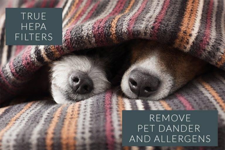 Pet-Allergies-768×512
