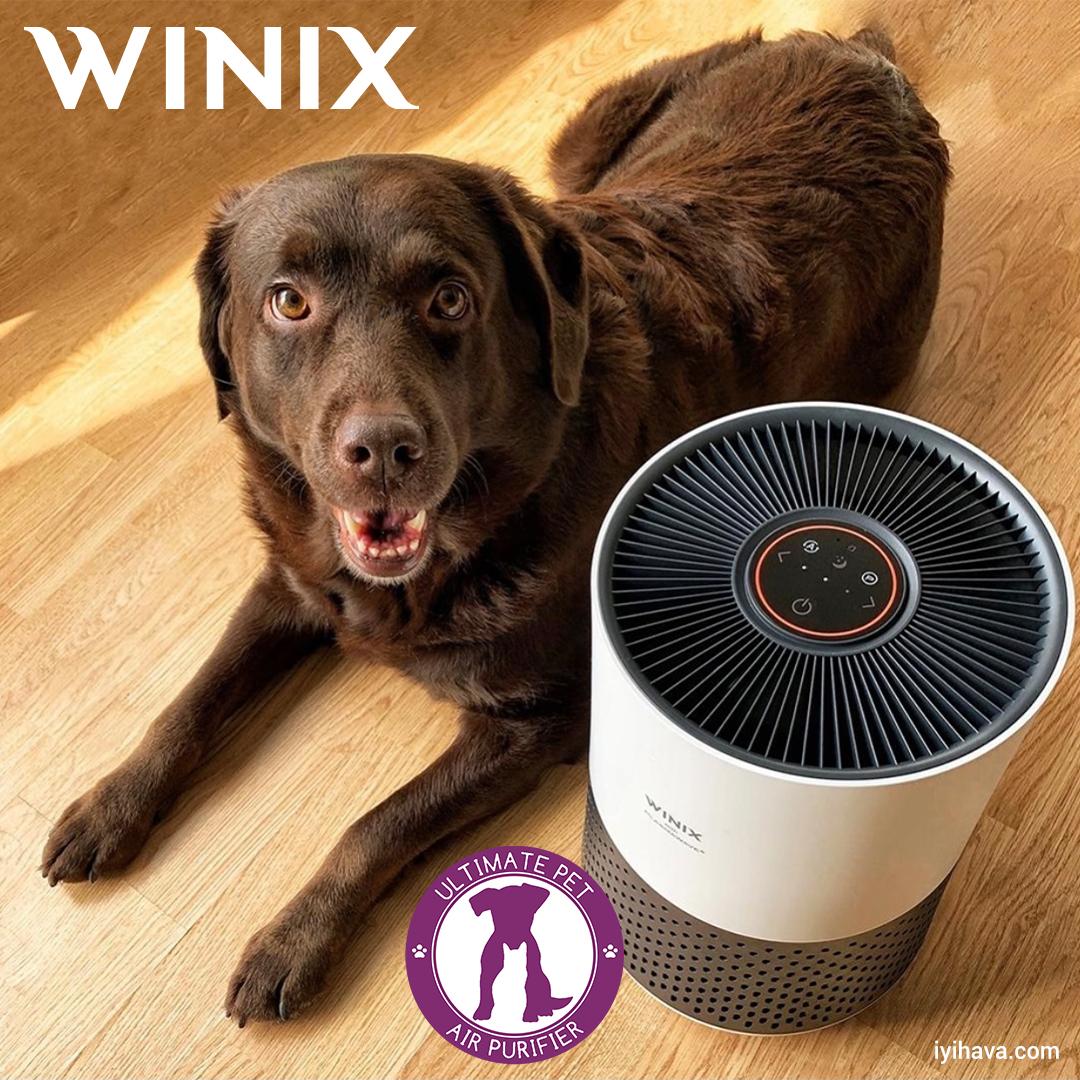 Kedi Alerjisine Iyi Gelen Hava Temizleme Cihazlarında En Iyisi WINIX