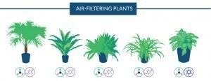 Hangi bitkiler, evdeki havayı temizler?