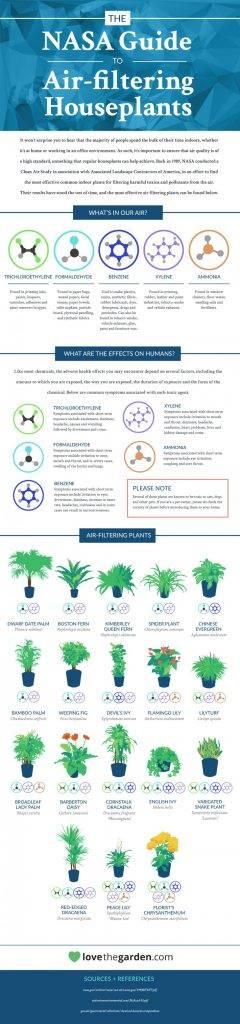 Havayı temizleyen bitkiler hangileri? İşte hava kalitesini iyileştiren bitkiler.