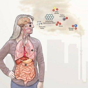 Hava Kirliliğinin Beyinde Neden Olduğu Hasarlar